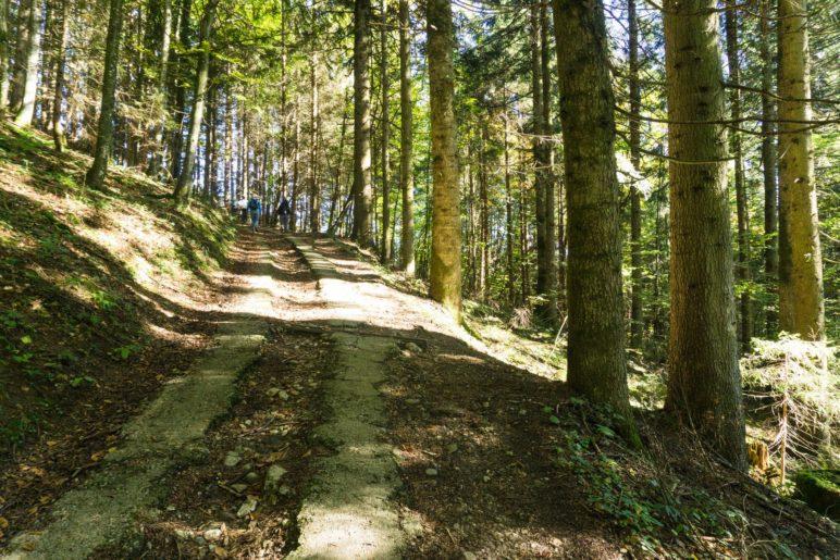 Der Weg führt erst im Wald bergauf …