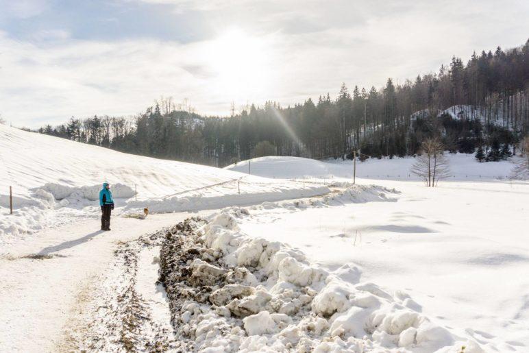 Auf dem Aufstiegsweg beim Bauern am Berg