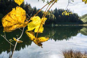 Herbstlaub am Taubensee
