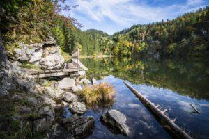 Beim Steg am Taubensee-Ufer