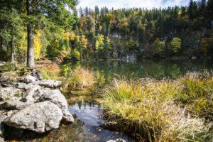 Das Ufer des Taubensees bietet immer wieder neue Eindrücke. Hier Felsen und Büschel von Gräsern