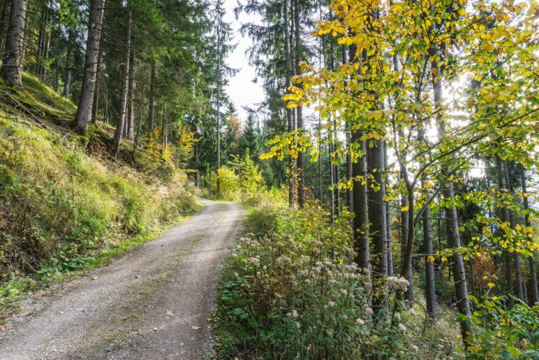 Die ersten Höhenmeter im Wald verlaufen auf der Forststraße