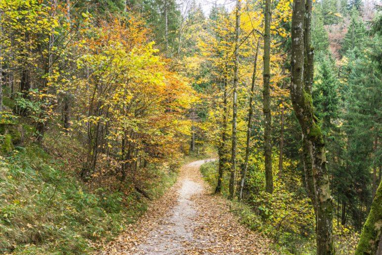 Wanderung durch den Herbstwald