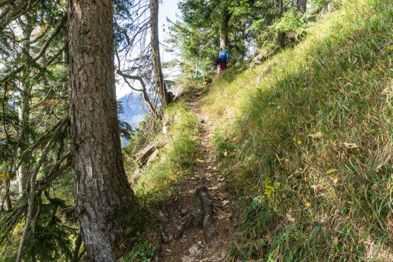 Mal durch den Wald, dann wieder im offeneren Gelände verläuft der Steig