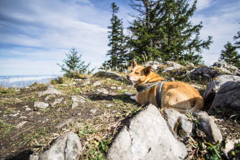 Gipfelrast auf dem Wildbarrem