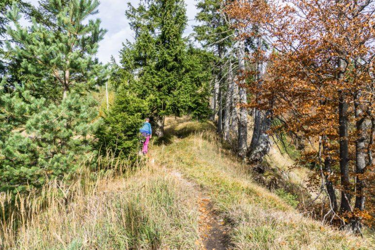 Auf dem leichten Kammweg geht es zum Gipfelkreuz