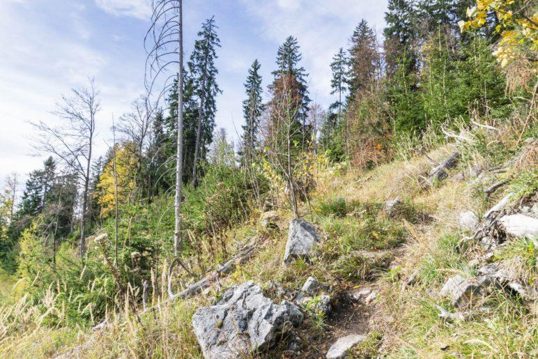 Der Pfad zum Gipfel, hier im etwas offeneren Gelände