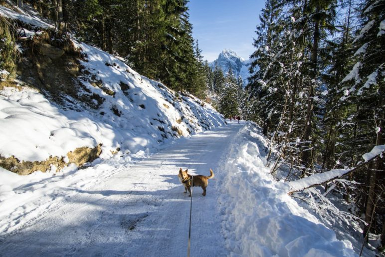Bergab mit Bergblick auf dem breiten Fahrweg