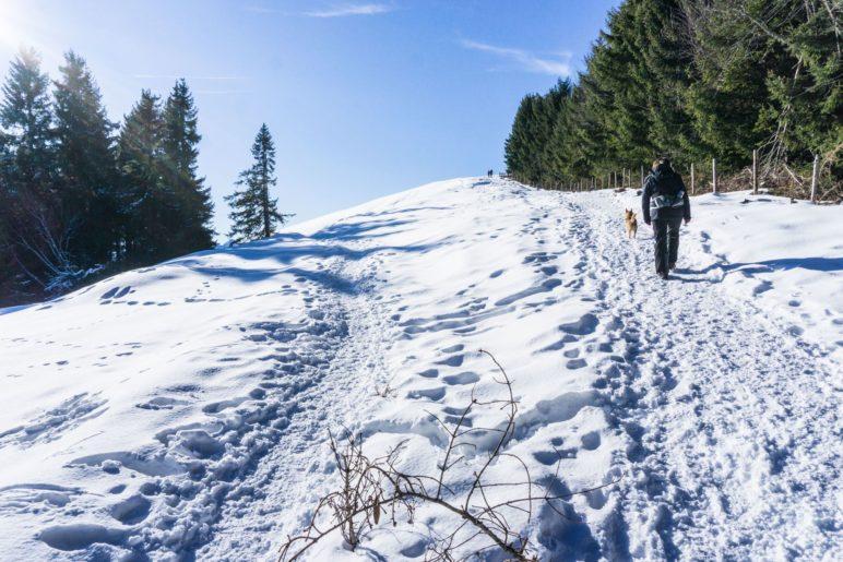 Gehen wir erst zum Gipfel oder gleich zur Stoißer Alm?