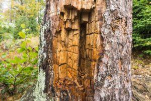 Auf dem Rachel lässt sich Holz in allen Zerfallsstufen finden