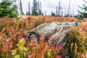 Ein Baumstamm liegt im rotbunten Gebüsch