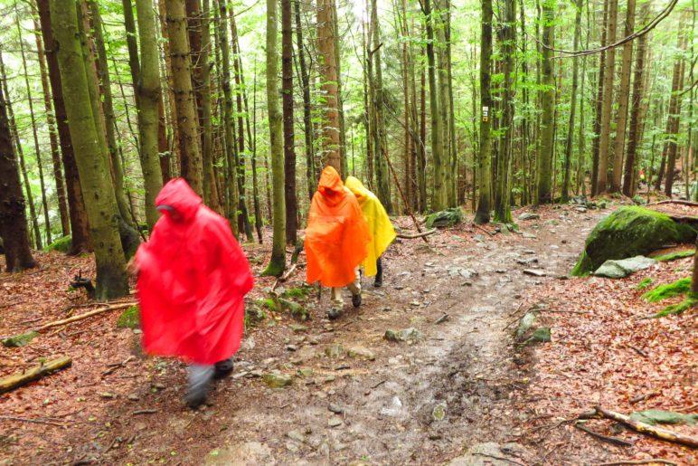 Auf dem Weg zum Rachelsee haben wir bunte Waldwichtel getroffen
