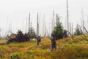 Im Nebel wirkt die Szenerie besonders bizarr und gespenstisch