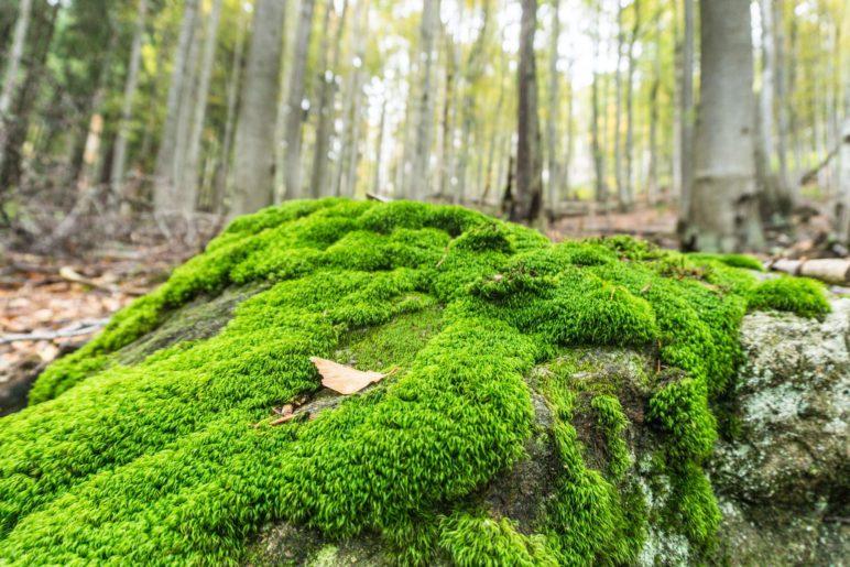 Durch den Wald wandern wir hinauf zum Rachel