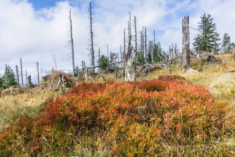 Vor dem Waldschmidthaus leuchtet das flache Gebüsch orangerot