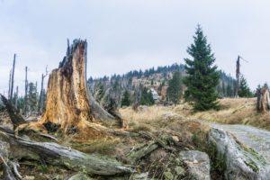 Im Hintergrund sieht man schon das Waldschmidthaus