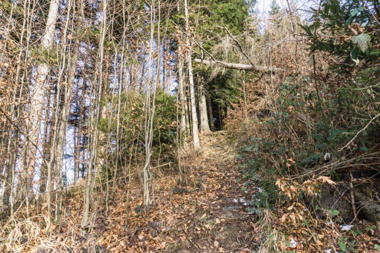 Durch den Wald in Richtung Dandlberg-Gipfel
