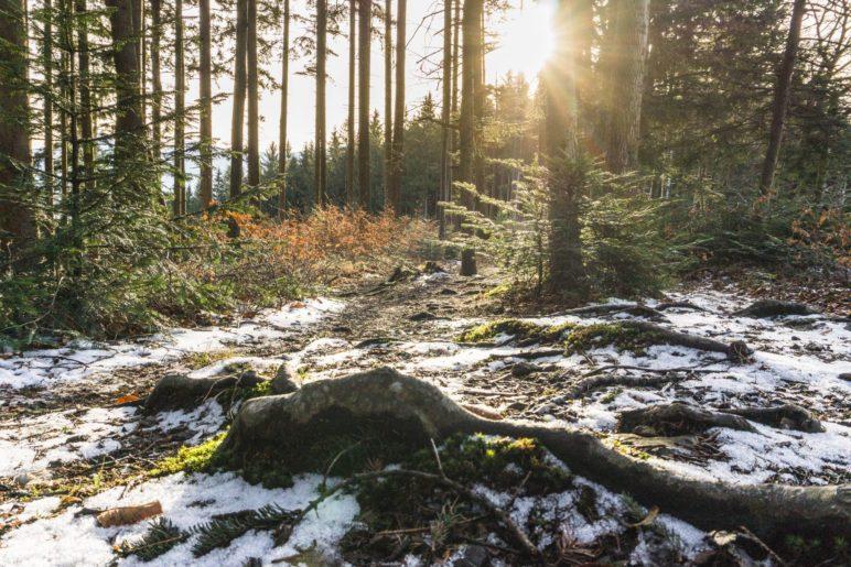 Keine Weitblicke, aber ein schöner Waldblick auf dem Gipfel des Dandlbergs
