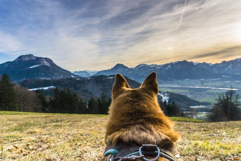 Hat er doch ein Auge für das Panorama? Hundeblick über das nördliche Inntal