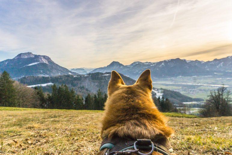 Sie nannten es Winterwanderung: Auf der Wiese am Dandlberg liegend in den Sonnenuntergang schauen