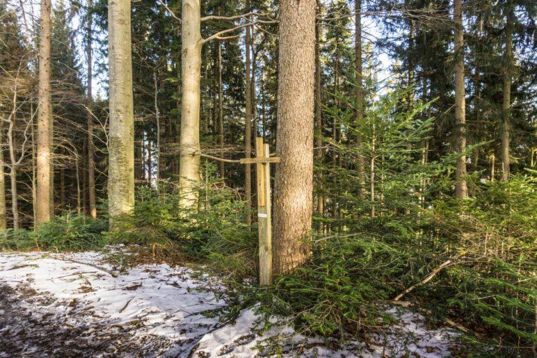 Kleiner Gipfel, kleine Aussicht, kleines Kreuz: Auf dem Dandlberg-Gipfel