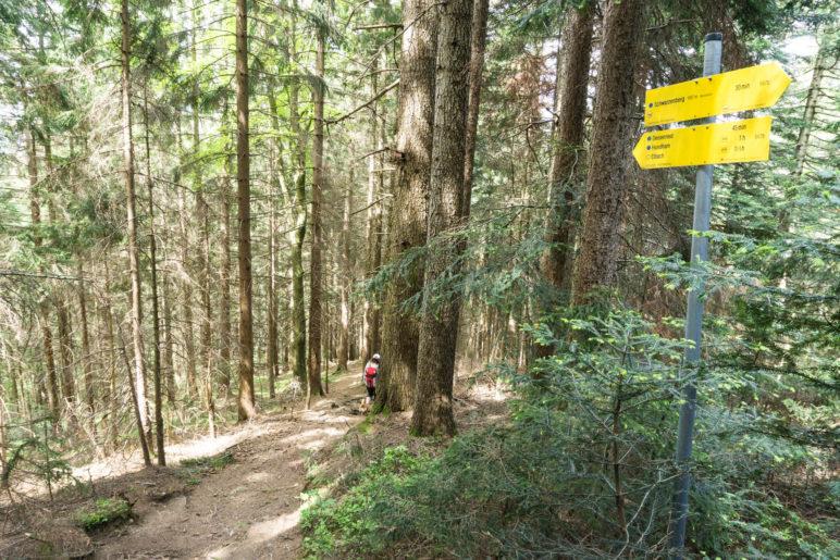 Steil bergab durch den Wald