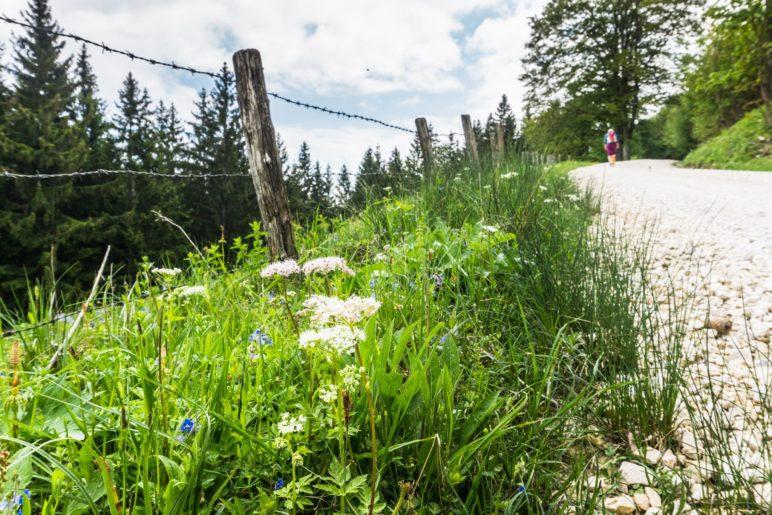 Wandern entlang der Almwiesen