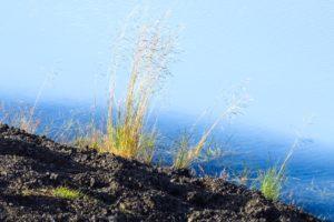 Besonders viel Ufervegetation hat er nicht zu bieten, aber am Südwestufer wachsen ein paar Gräser