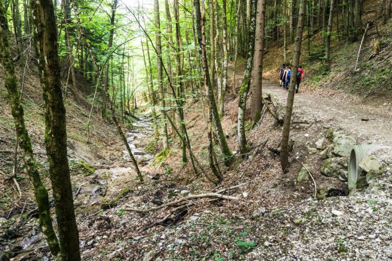 Wieder im Wald, unterhalb der Hefter-Alm