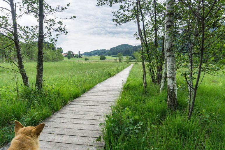 Auf dem Holzbohlenweg durch die Feuchtwiesen
