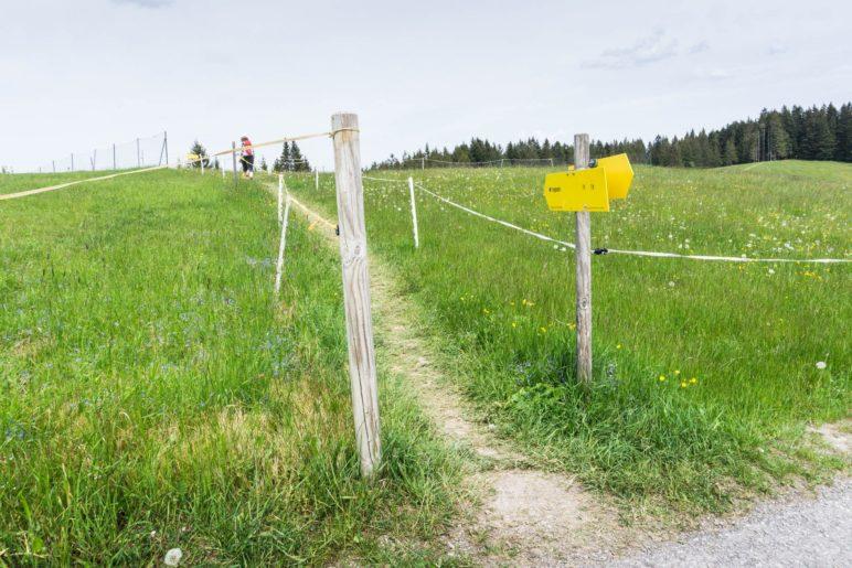 Kleiner Wiesenweg in Richtung Tregler-Alm