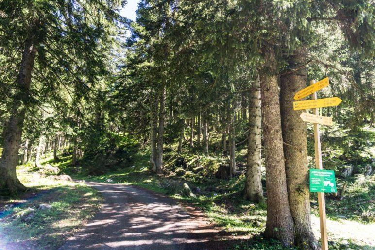 Hier nehmen wir den linken Weg zum Dürrnbachhorn