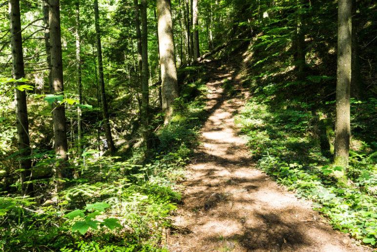 Deutlich schöner als der Fahrweg: Aufstieg im Wald
