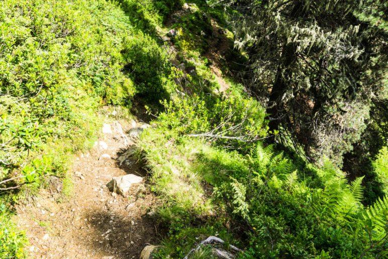 An einigen Stellen führt der Steig recht vogelwild am Hang entlang