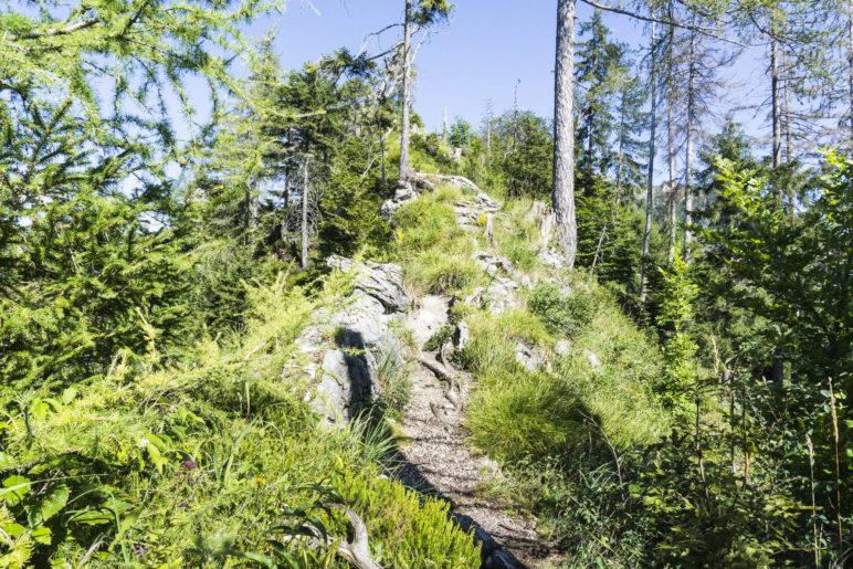 Im Aufstieg zum höchsten Punkt der Wanderung auf etwa 925 Metern Höhe
