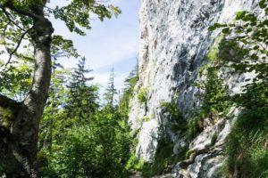 Mächtige Felswand des Traunsteins in der Kaltenbachwildnis