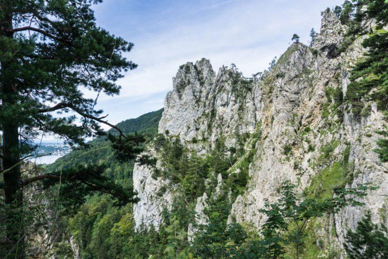 Blick auf den höchsten Punkt der  Kaltenbachwildnis, den Adlerhorst
