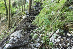 Auf schmalen und wurzeligen Steigen geht es im Wald bergauf