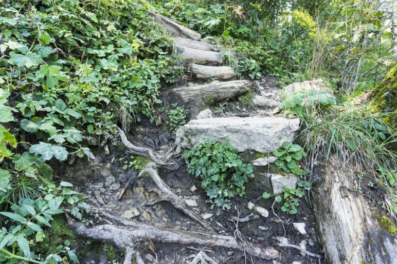 Treppen auf dem Aufstiegsweg im Wald