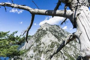 Der Traunstein, von den Ästen des Baums umrahmt