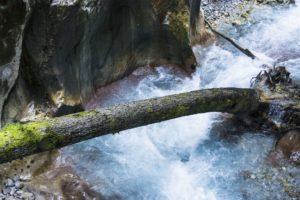EIn Baumstamm im Wasser