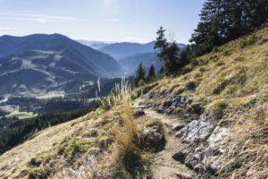 Eiun schöner, schmaler Steig führt von der Käserwand über die Wiese bergab