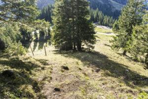 Der kurze Abstiegsweg ist recht steil, der Steig ist nur teilweise erkennbar