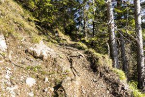 Kurz darauf führt der Steig ein paar Meter durch den Wald
