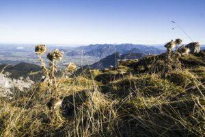 Ein Blick in die Chiemgauer Alpen