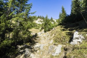 Oberhalb der Lacheralm führt der Weg durch den lichten Wald