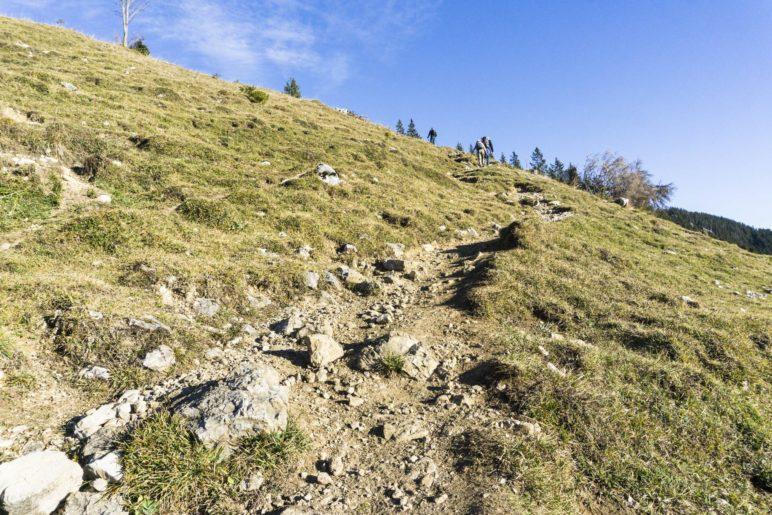 Ein schmaler Wiesenweg führt zur Lacheralm