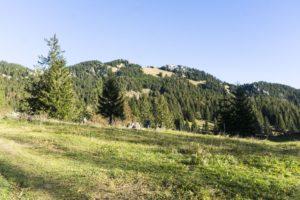 Ein erster Blick auf die Gipfel von Wildalpjoch und Käserwand