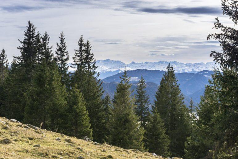 Der Blick zu den schneebedeckten hohen Alpengipfeln