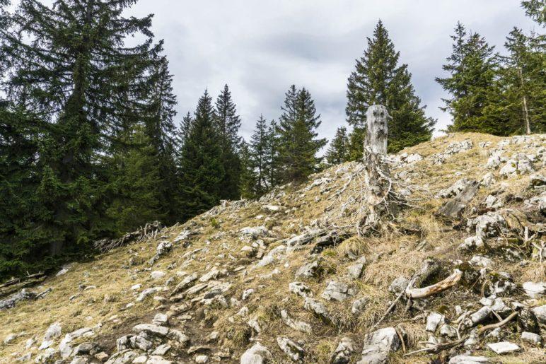 Die letzten, felsdurchsetzten Meter zum Gipfel des Seebergkopfs